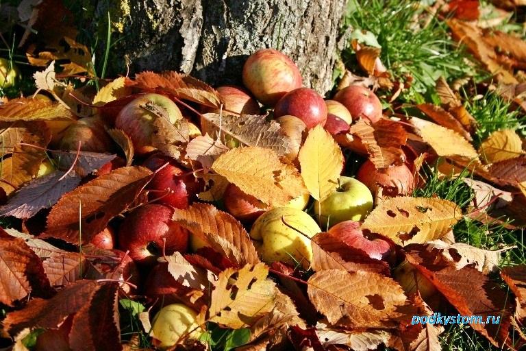 Избавление от опавших листьев