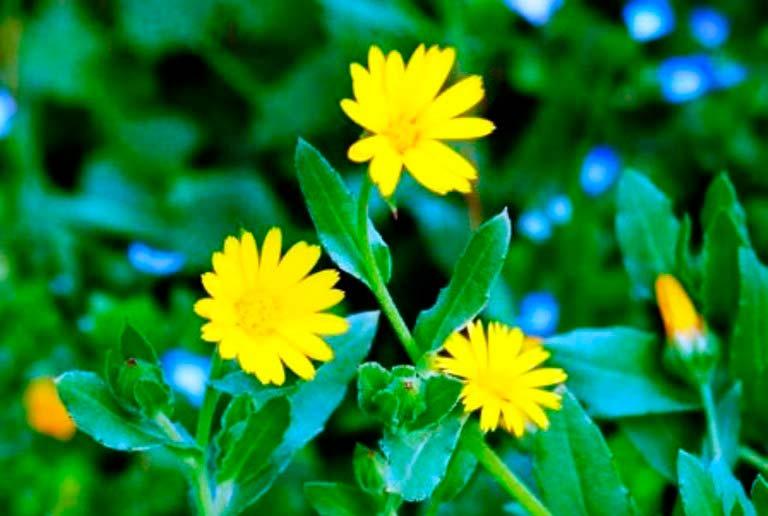 Растения в саду