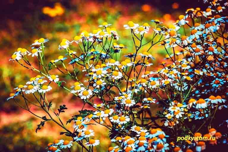 Лечебные-растения