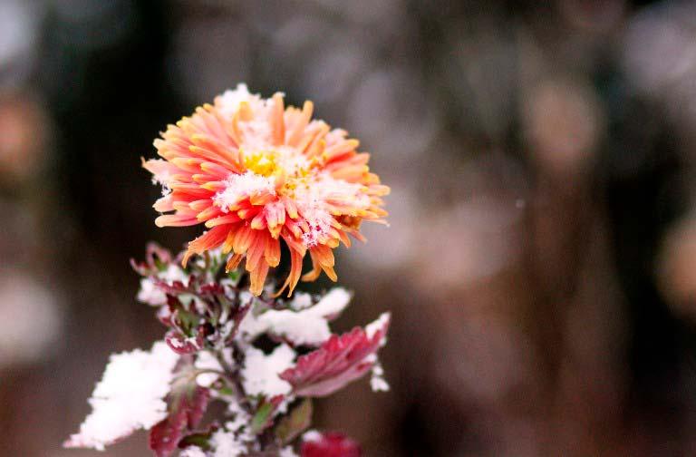 Осенний-цветок