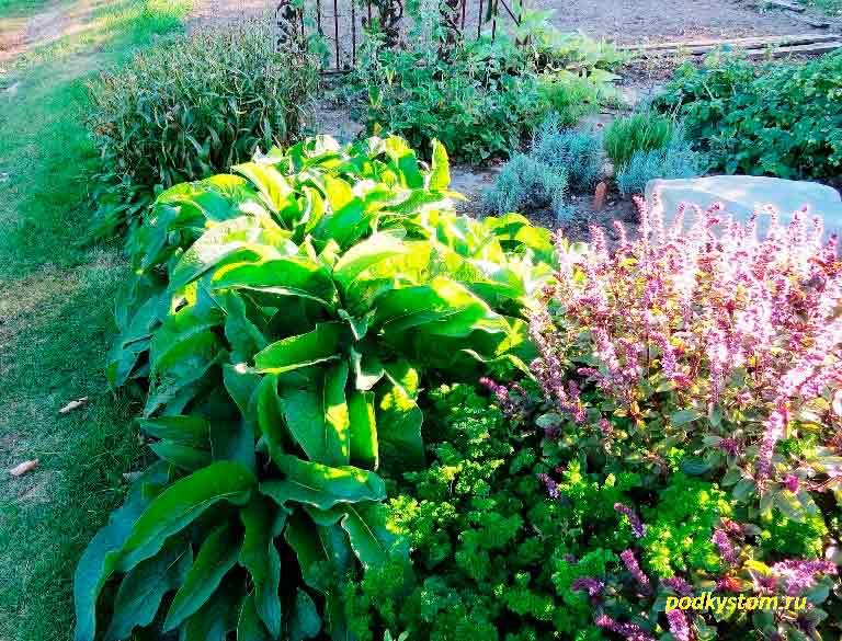 Пахучие-растения