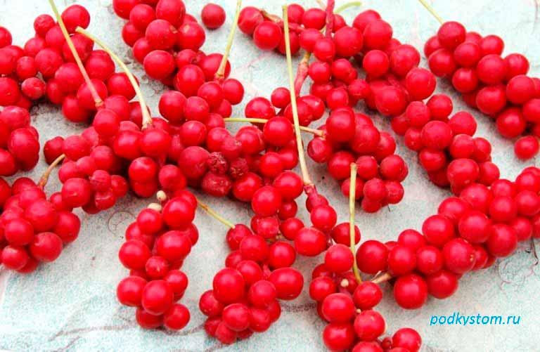 Плоды-осенью