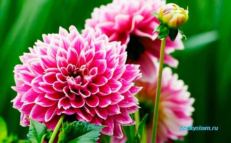 Цветы-в-саду