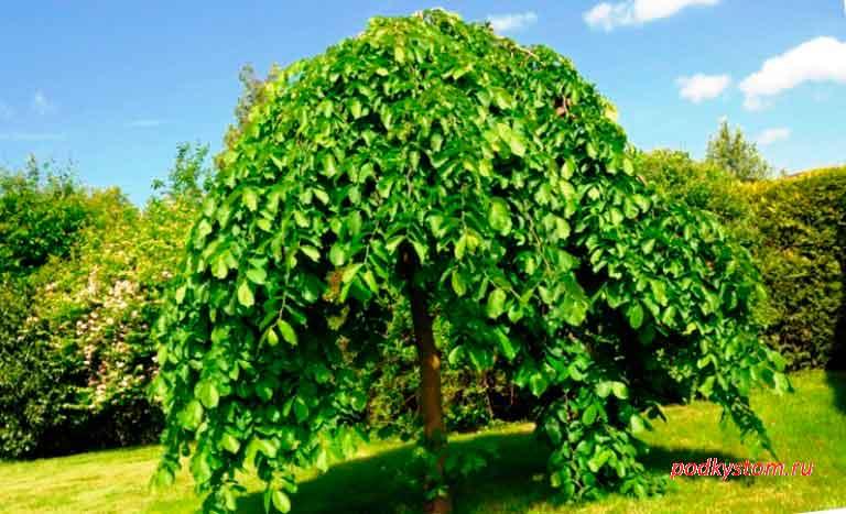 Тень-под-деревом