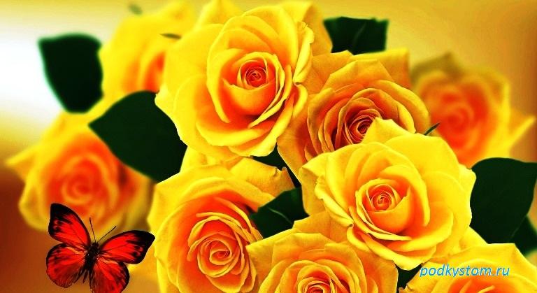 Жёлтая роза