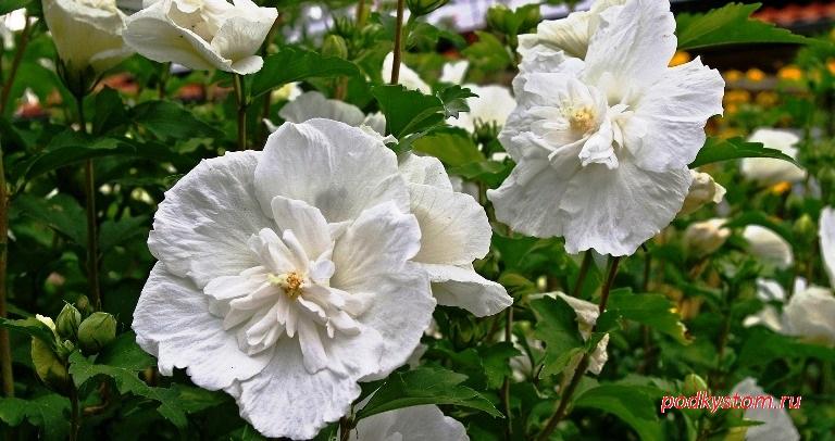 Цветы в белой палитре