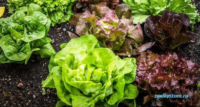 Свежий зелёный салат