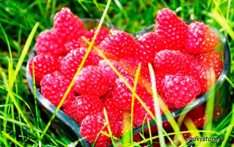 Тарелка-с-ягодами