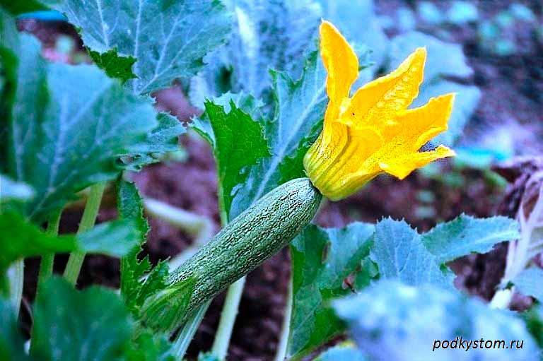 цветок-на-грядке