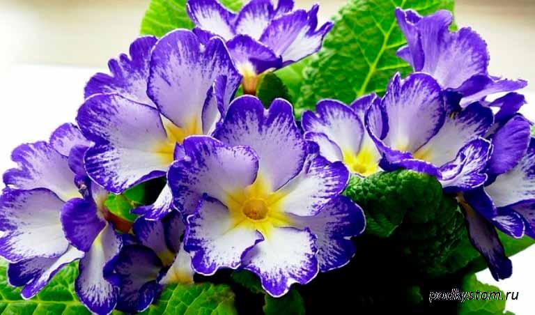 Первый-весенний-цветок