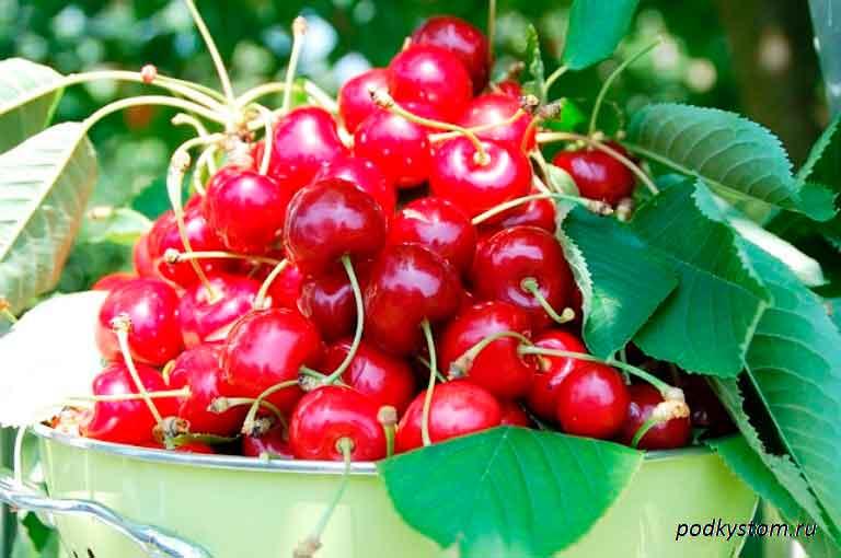 Плодовые-садовые-деревья