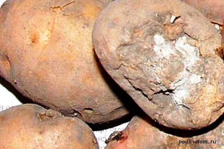 Картошка-сухая-гниль