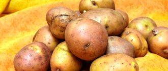 Здоровый-картофель