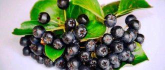 Черноплодная-рябина-или-арония