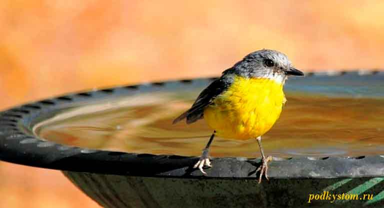 Поилка-для-птиц