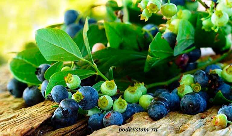 Сорта-голубики-садовой
