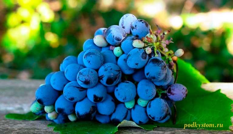 Как-сделать-вино-из-винограда