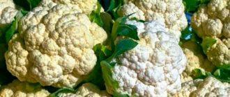 Цветная-капуста-условия-выращивания