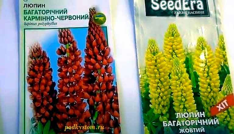 Люпин-выращивание-из-семян
