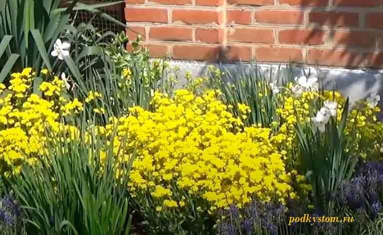 Бордюрные-растения